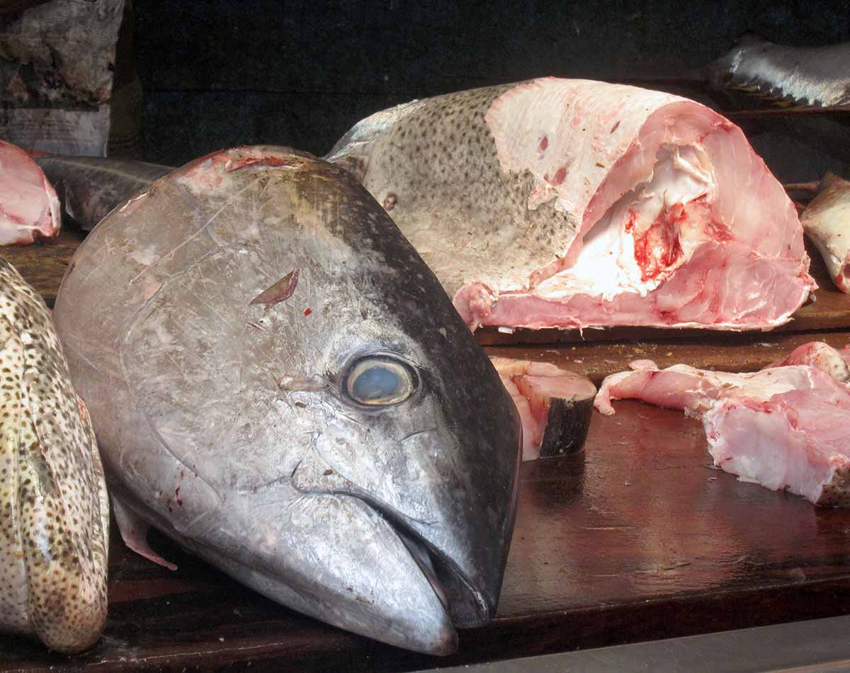 2014-04-Fischhandel-Sri-Lanka